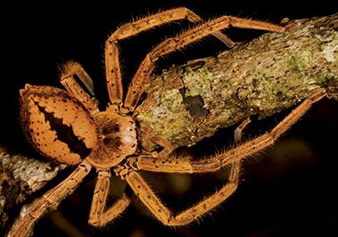 Daintree Rainforest Fauna