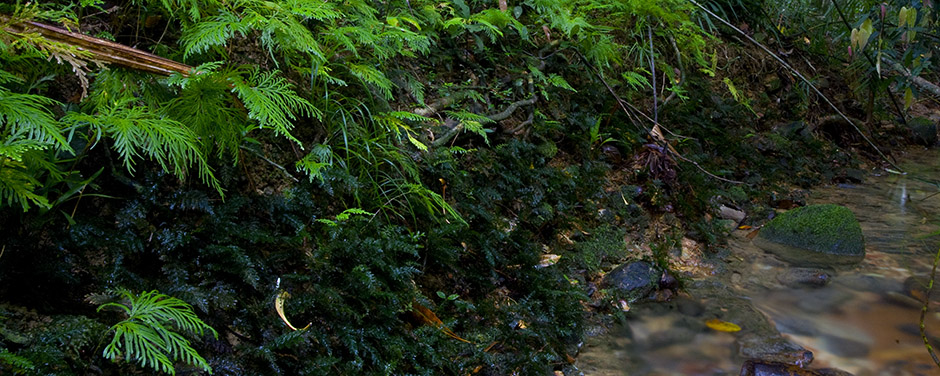 World Heritage - Cooper Creek Wilderness
