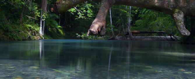 Rainforest Revelations