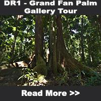 Grand Fan Palm Gallery Tour