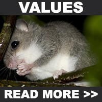 Cooper Creek Wilderness Values