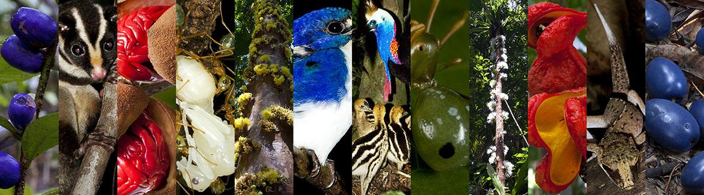 Daintree Rainforest images