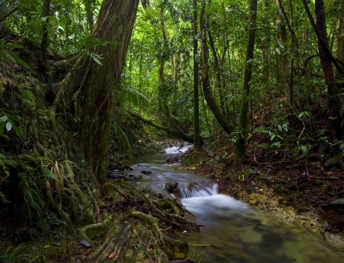 Daintree Rainforest Living