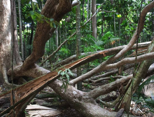 Climate Change in Daintree