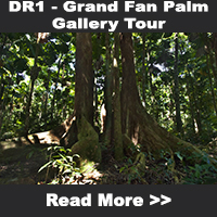 Grand Fan Palm Gallery Tour