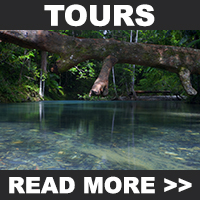 Cooper Creek Wilderness Tours