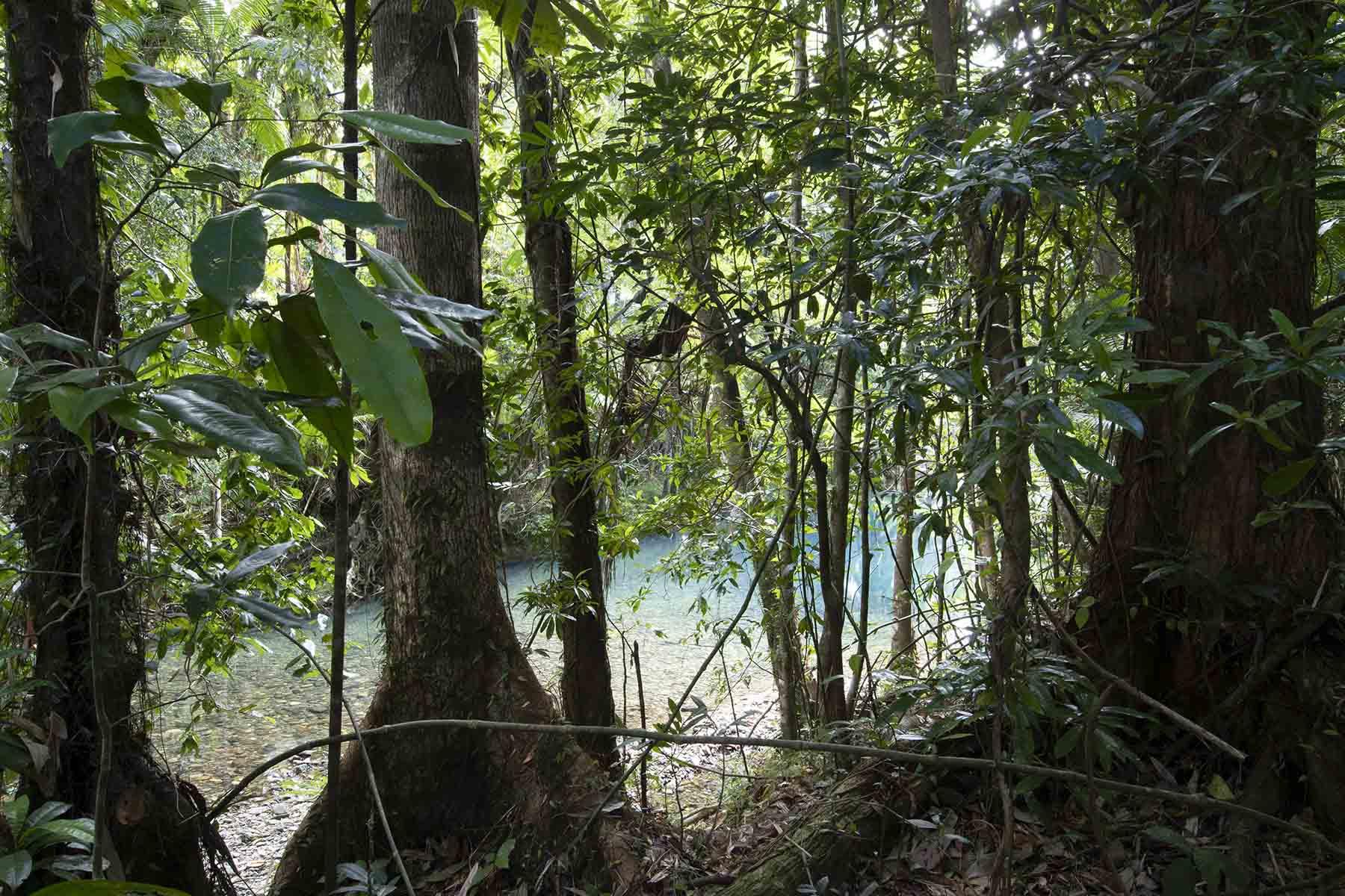 Cooper Creek Wilderness Extension