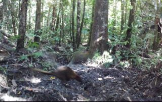 August 2020 - Camera Traps